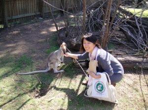 feeding a baby kangaroo, aka a wallaby!